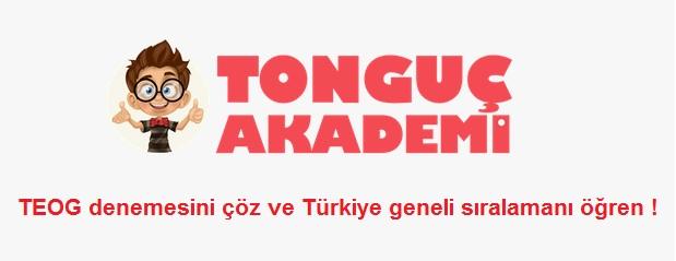 tongucakademi-com
